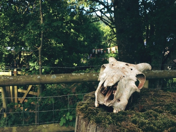 Little Stitch Blog: Sheep skull on gatepost