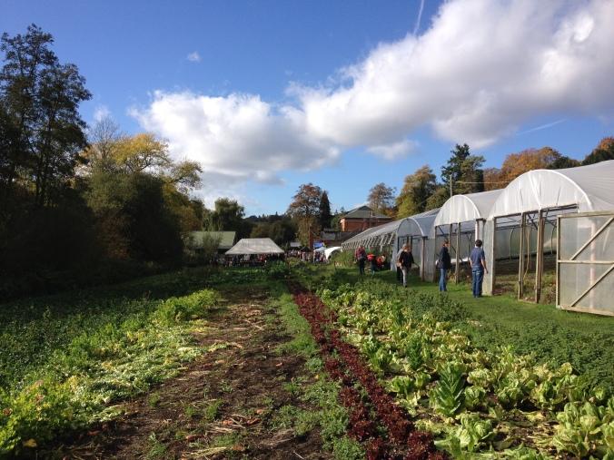 Tolhurst Organic Farm